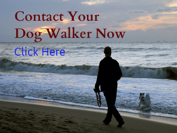 Get a Dog Walker in Singapore