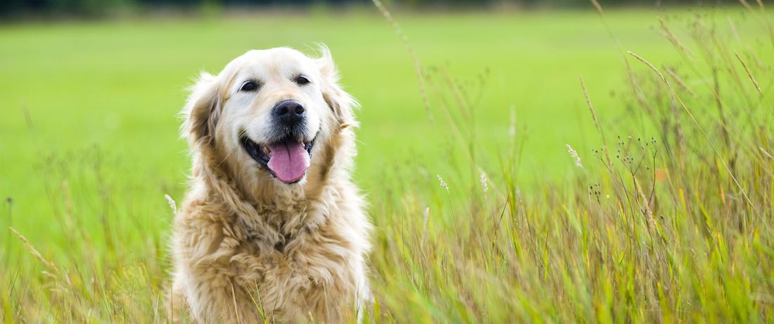Dog Owners Unite!